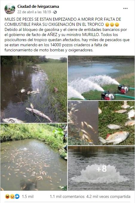 Usan fotos pasadas y fuera de contexto para asegurar que peces en el Chapare se están muriendo