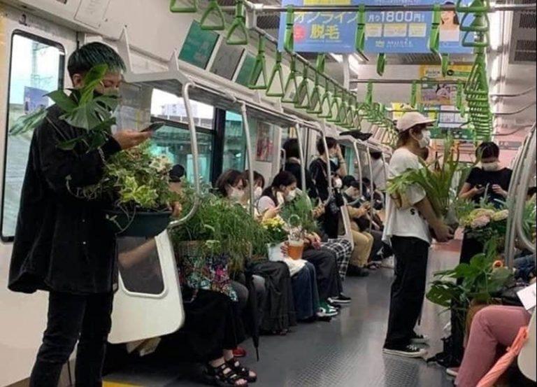 No, los japoneses no están adquiriendo plantas de interior para curar males mentales causados por la pandemia