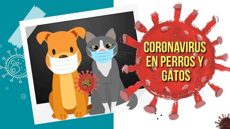 Las mascotas también pueden contraer COVID-19, pero no contagiar