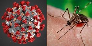 Conoce cómo diferenciar los síntomas del coronavirus y del dengue