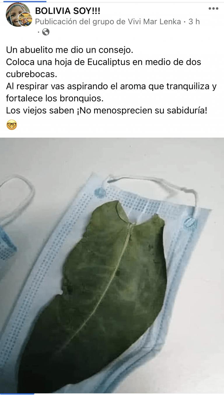 """Respirar el aroma del eucalipto entre dos barbijos no """"fortalece los bronquios"""""""